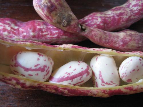 Borlotti beans by Kattebelletje