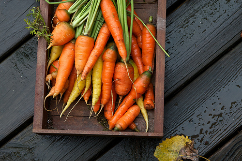Carrots by Susy Morris