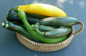 Courgettes: common (dark green), trombette (curved light green), Roman (mottled green), and summer squash (yellow) by Cristina Noviceglia