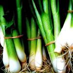 Spring onion / Green onion / Scallion (Cipollotto / Cipolle novelle)