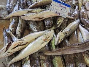 Hake (Nasello / Nasello argentato / Merluzzo argentato / Pesce lupo / Pesce prete) (Merluccius merluccius)
