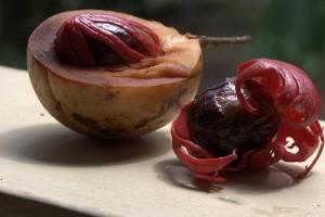 Nutmeg (Noce moscata) (Myristica fragrans)