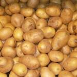 Potato (Patata) (Solanum tuberosum)