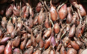 Shallot (Scalogno) (Allium cepa Var. aggregantum)