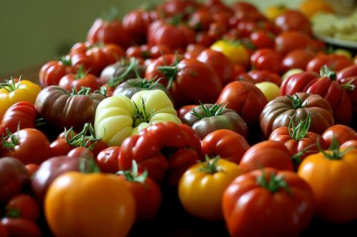 Tomato (Pomodoro) (Lycopersicum esculentum)