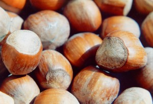 Hazelnut / Cob nut / Filbert (Nocciola / Avellana) (Corylus avellana)