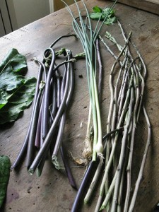 Wild asparagus by The Weed One