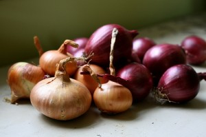 Onion / Spring onion / Scallion / Green onion (Cipolla) (Allium cepa)