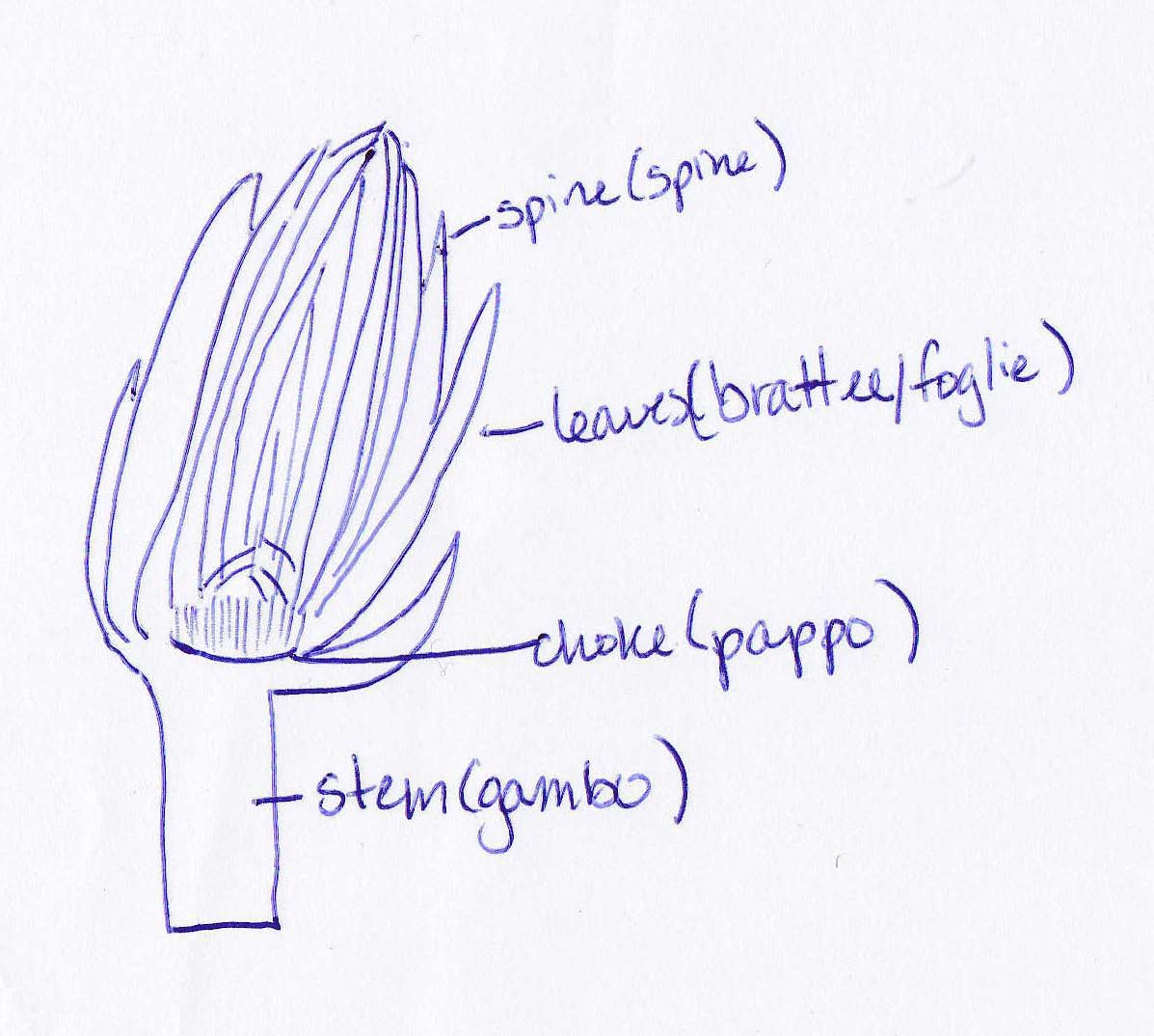 diagram of a celery a guide to buying vegetables used in italian recipes