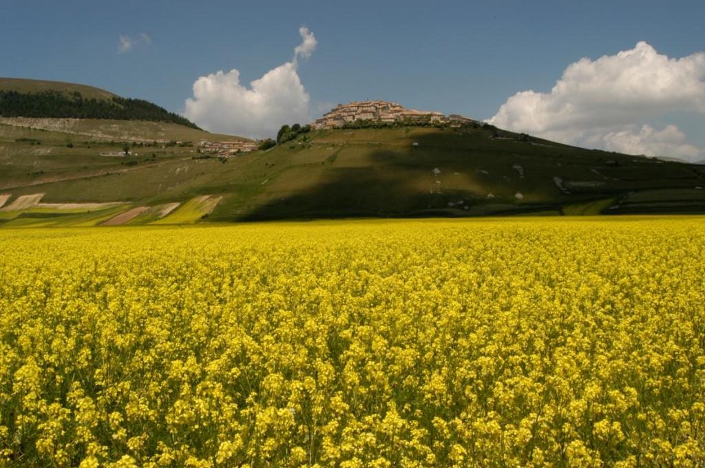 Castelluccio di Norcia (Monti Sibillini) by Falgraf