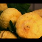 Lemons by Little Sadie