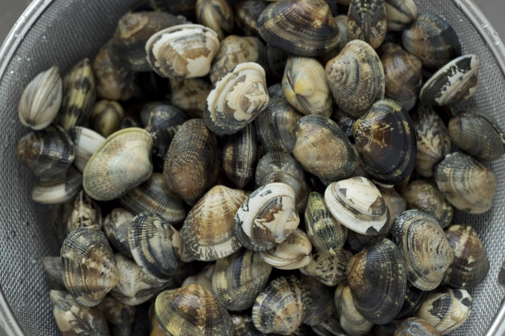 Vongole verace (Clams)