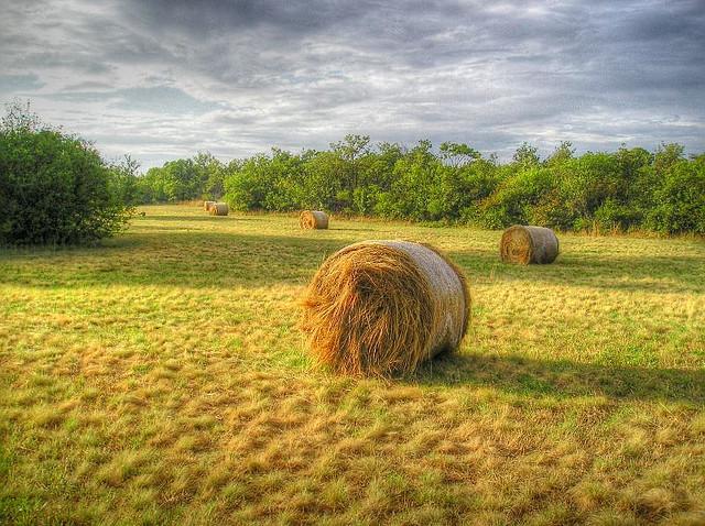 Hay bales near Trieste by Mariotto52