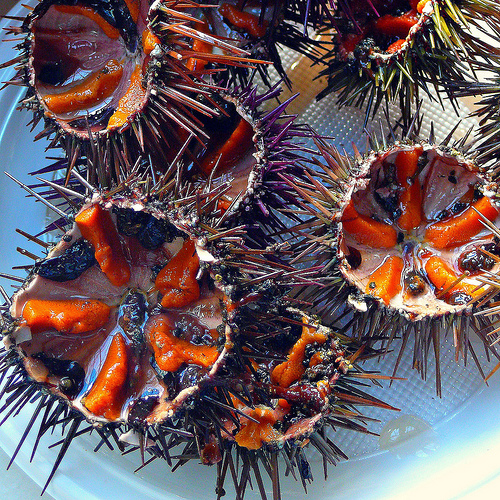 how to catch sea urchin