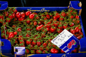 datterini tomatoes - sardegna