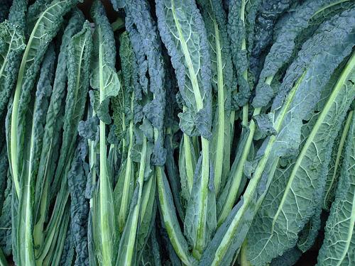 Black cabbage by Nick Saltmarsh