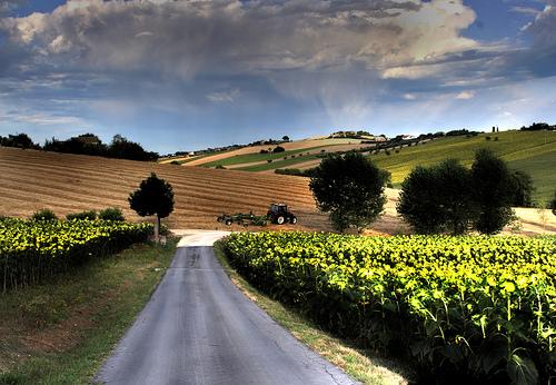 Country road outside Numana by Mirco Sem