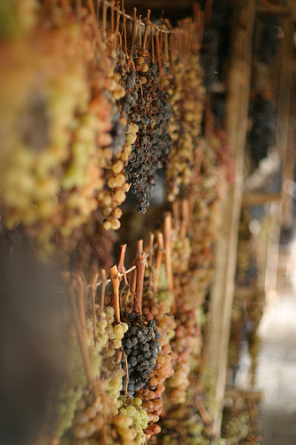 Drying grapes for Vin Santo by Chris Pencis