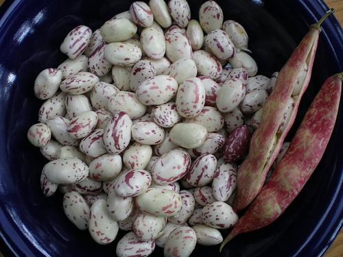 Lamon beans by Jen Waller