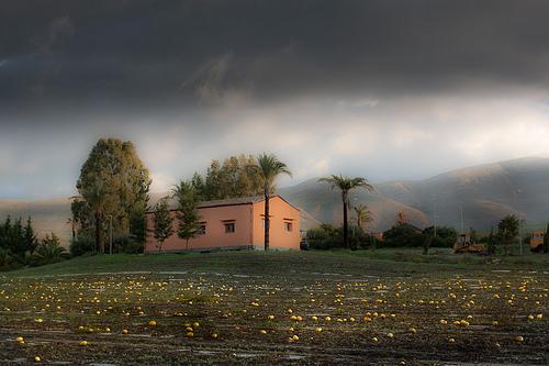 Melon field by Carlo Columba