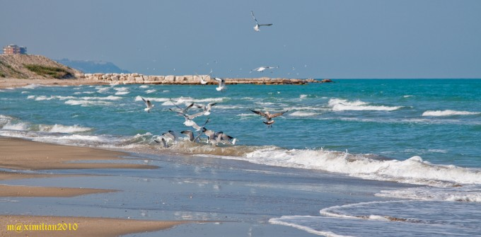 Seagulls by Massimiliano