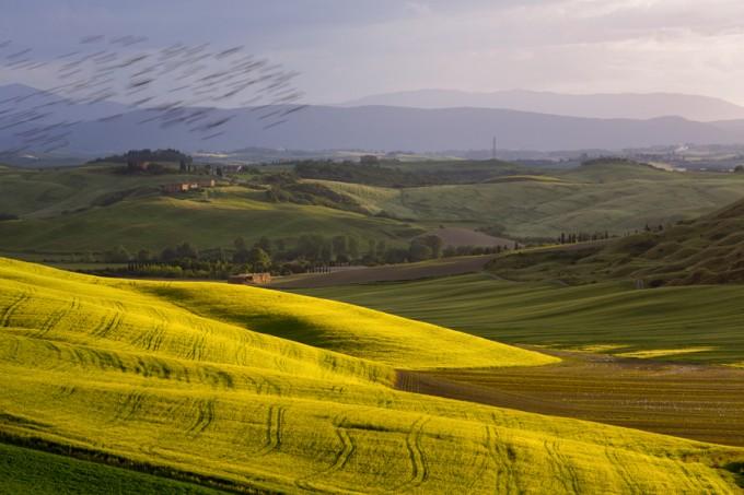 Siena countryside by Giuseppe Moscato