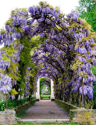The gardens of Villa Pisani by Bernhard Eckert