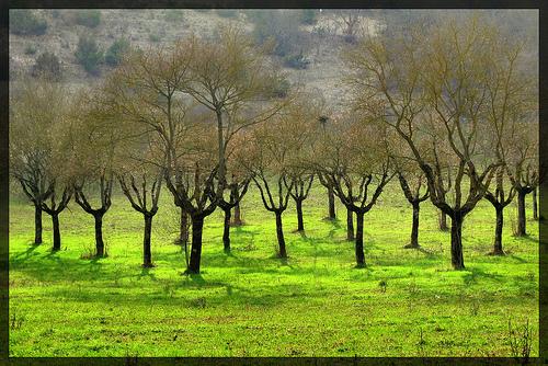 Trees by Gigi62