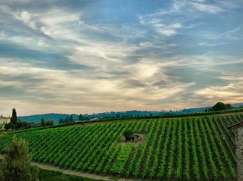 Vineyard in Montepulciano by Giampaolo Macorig