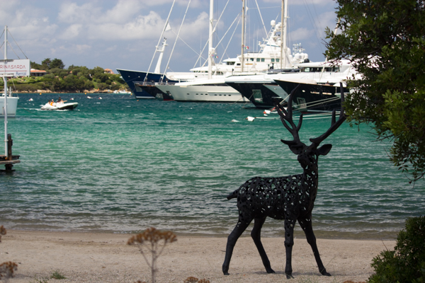 The cervo (deer) of Porto Cervo