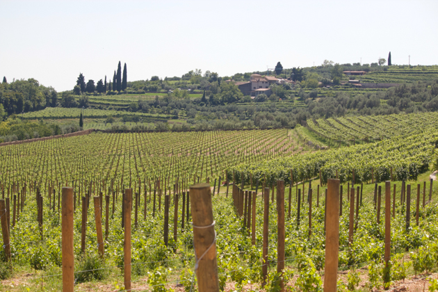 Vineyard in Valpolicella