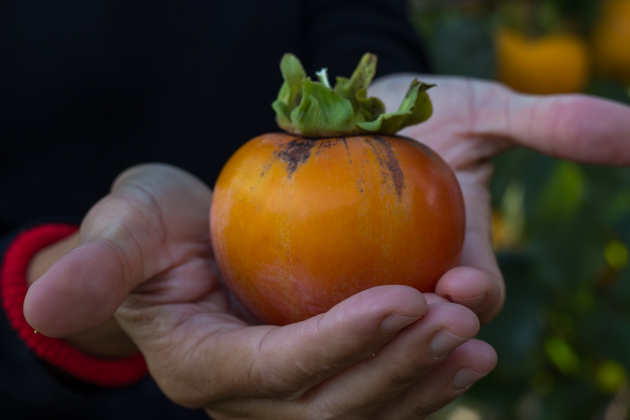 Sharon fruit (persimmon)