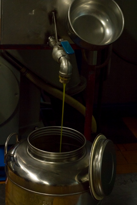The resulting olive oil