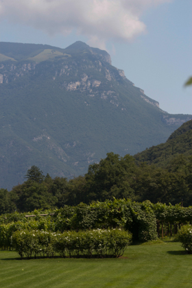 The dolomites towering over the vineyard