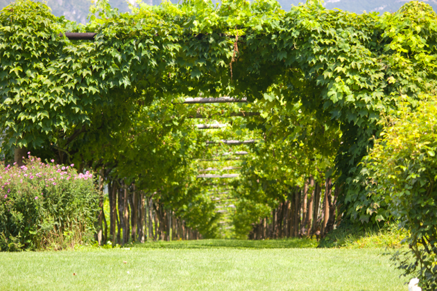The Carmenere vines in front of the villa