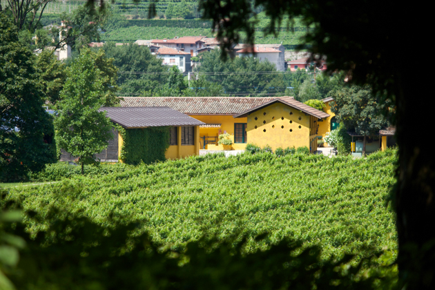 Cellar tour: What is the secret ingredient in San Leonardo?