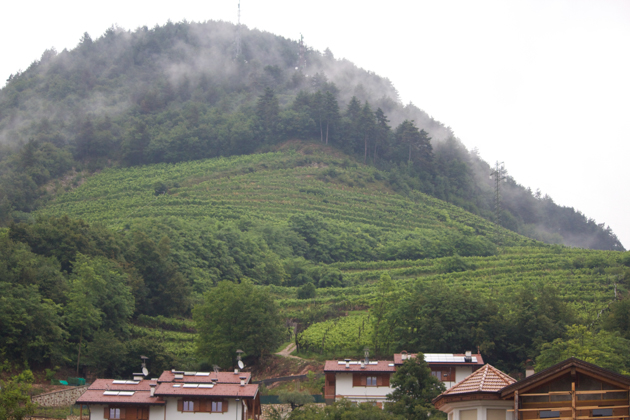 The Pallai vineyard above Sandri's family house