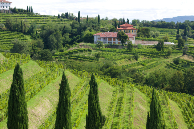 Cellar Tour: Vigne di Zamo and their surprising wines