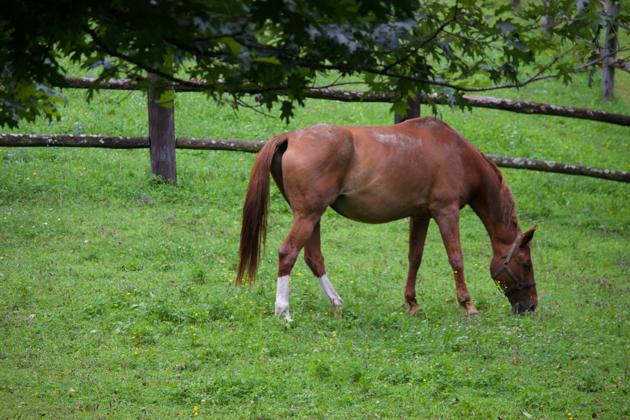 Horses at La Subida
