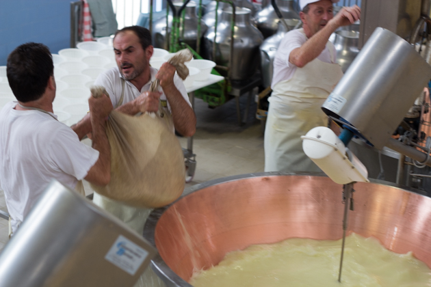 Strong men lifting the 50 kilo bundles of curd