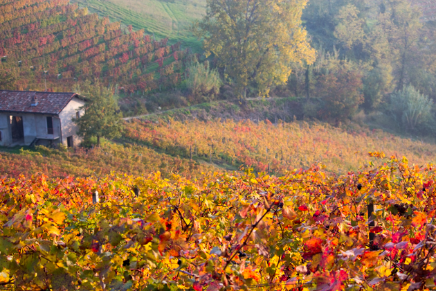 The Langhe in the autumn