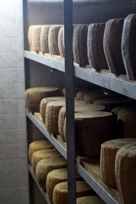 Shelves full of Pecorino Siciliano DOP