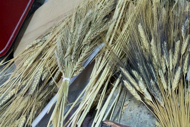 meimanrensheng.com sicilia-2432