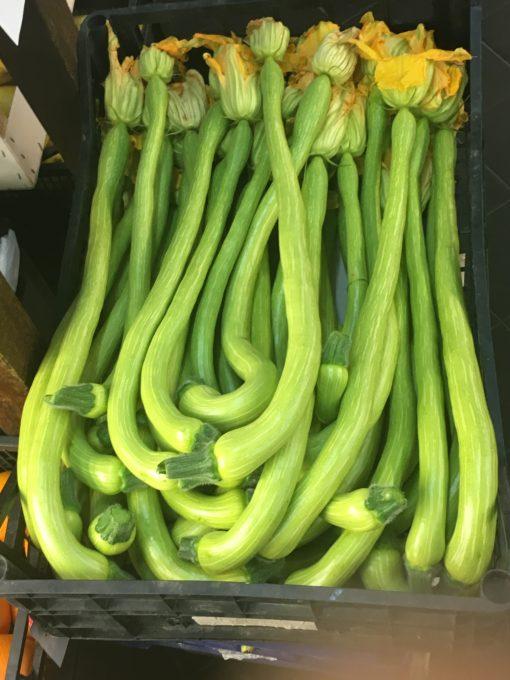 Trombette courgettes/zucchini in Liguria