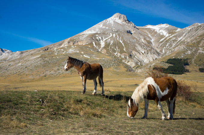 Horses grazing in Campo Imperatore