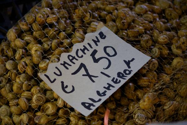 Lumachine (snails)
