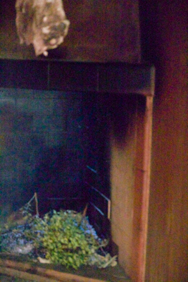 The smoke room with aromatic plants being used to smoke the salumi