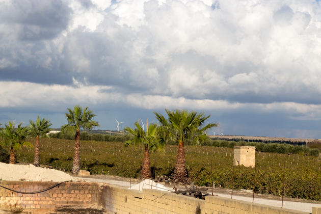 Marsala vineyards