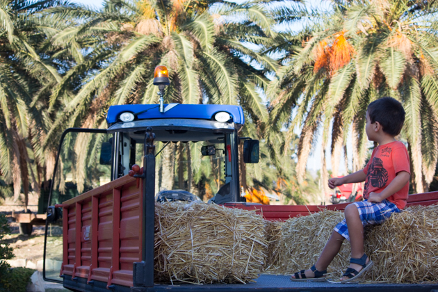 Going for a tractor ride through the olive trees