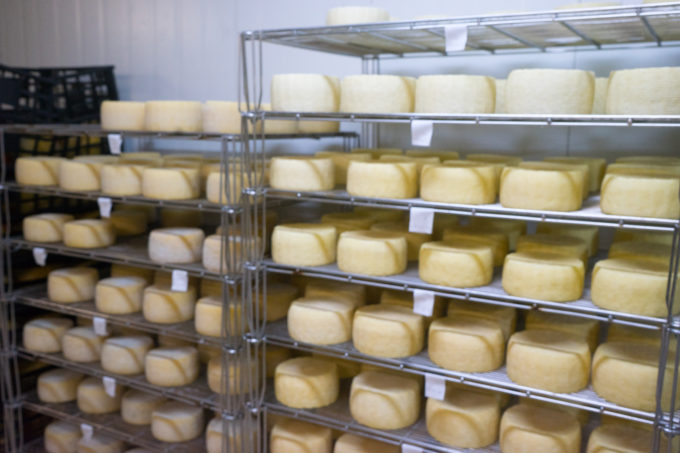 Aging the cheeses